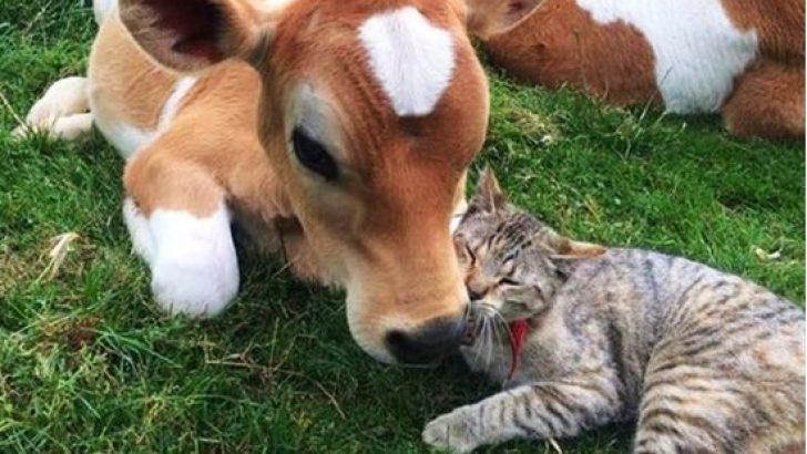 Hayvanlar arasındaki örnek alınması gereken dostluklar