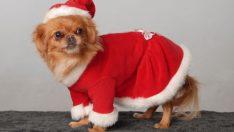 Evcil hayvan kıyafetleri yatırımcılara yeni iş imkanları sunuyor