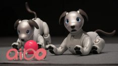 Sony'den robot köpek Aibo!