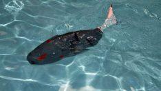 Fırat Üniversitesi robot balık üretti!