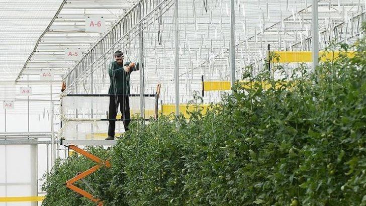 Termal serada LED teknolojisiyle üretimi artırma dönemi