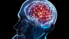 Beynimiz, Kiminle Vakit Geçirirsek Onun Beynine Benziyor…