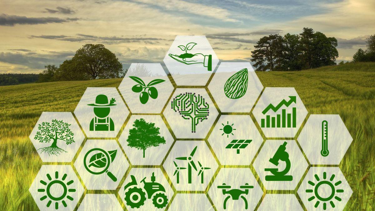 Zeytinden elde edilen verim akıllı tarım teknolojileri ile artıyor!