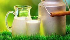 Süt prim desteği yükseltildi