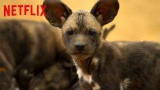 Netflix'ten Unutulmayacak Bir Belgesel Dizisi, Gezegenimiz