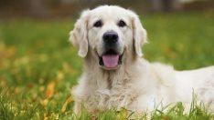 Fransa'da Belediye Başkanı Köpek Havlamasını Yasakladı