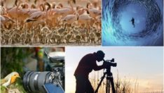Spor ve Belgesel Çekimleri İçin Canon'dan İki Yeni Lens
