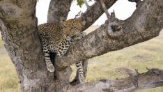Serengeti'ye Destansı Bir Keşif Yolculuğu