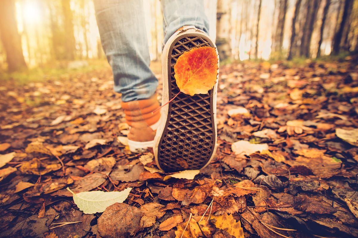 Sonbahar Alerjisinden 14 Adımda Korunmanız Mümkün!