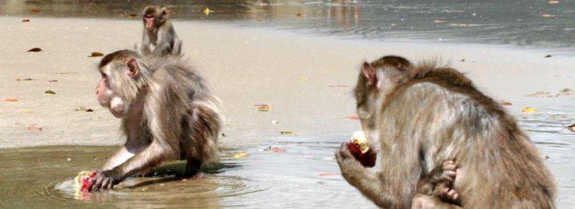 """Değişimin Anahtarı Kritik Kütle ve """"Yüzüncü Maymun Deneyi"""" (The Hundredth Monkey)"""