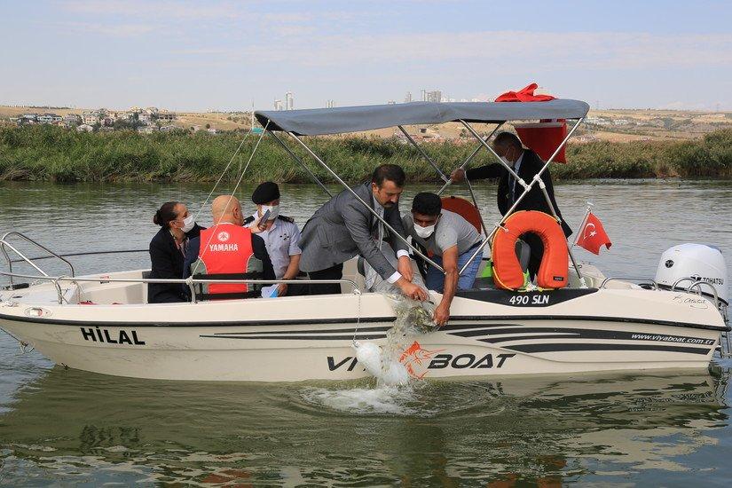Mogan Gölü'ne Yüz Bin Sazan